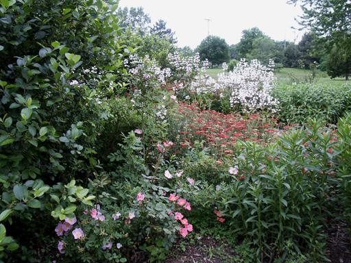 Bridgegardenblooms.jpg