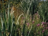 wild-grassgarden2.jpg
